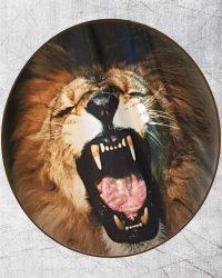 lion subli (1)